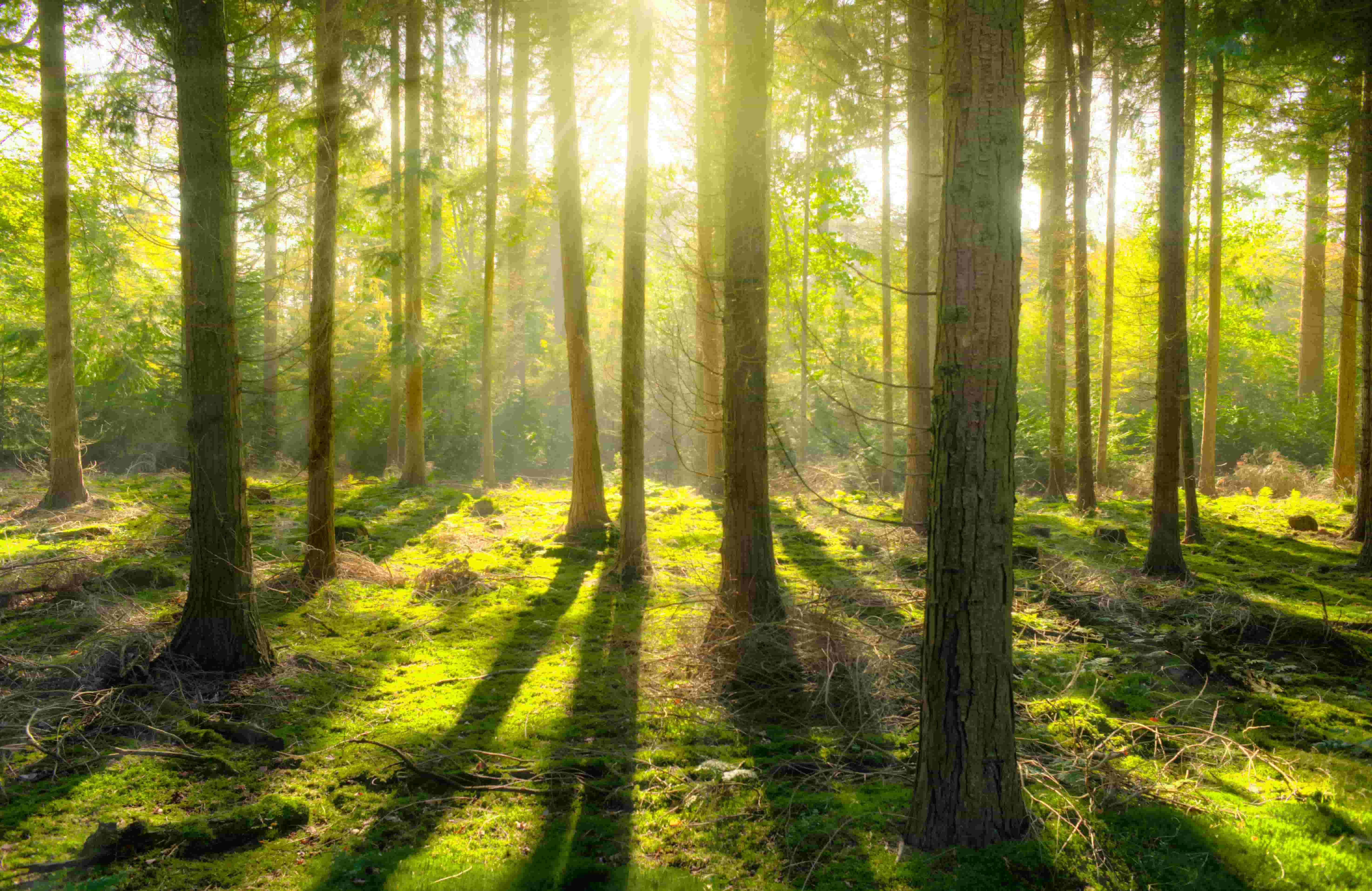 Solving Climate Change With Trees